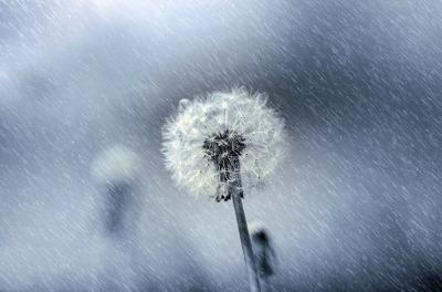 flower-315445_1280